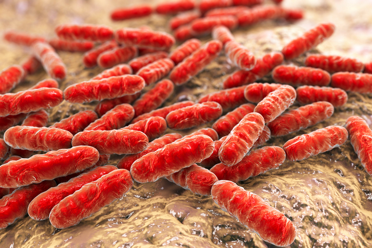Clostridium difficile bacteria