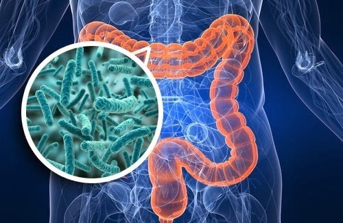 Gut microbiome close-up